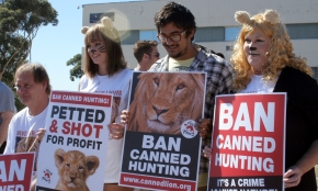 Ban canned lion hunting supporters 4