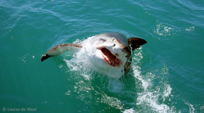 Beaching shark previous trip 1