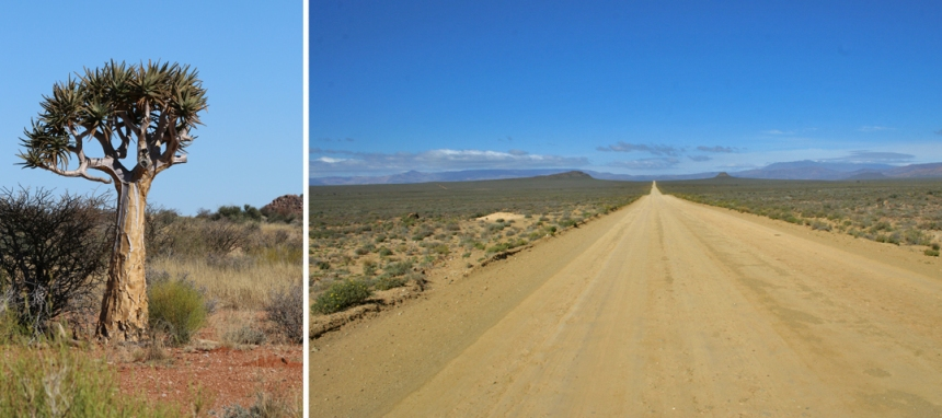 Northern-Cape-Dirt-Road-Kokerboom