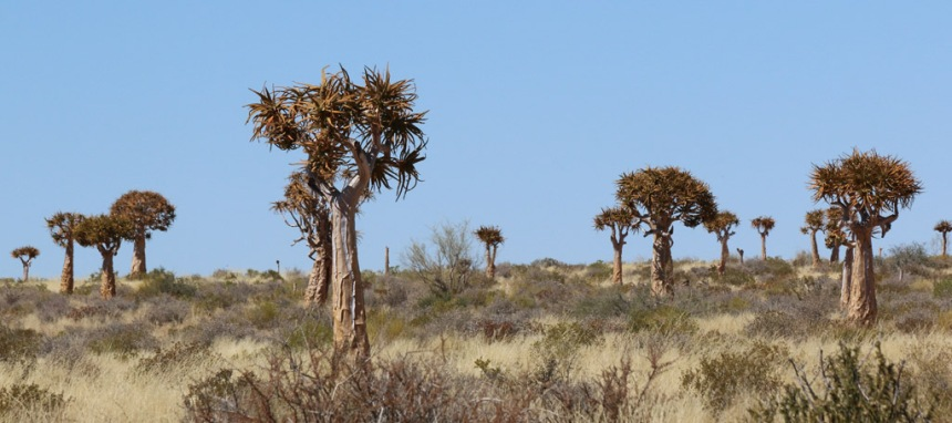 Augrabies-Quiver-Tree-Forest