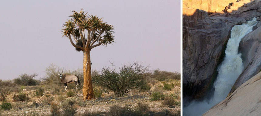 Augrabies-Quiver-Tree-Oryx