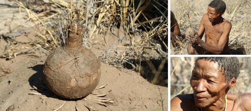 San people Nhoma Safari Camp Namibia water calabash