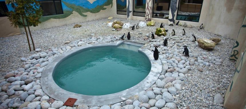 African-Penguin-Seabird-Sanctuary-APSS-Kleinbaai