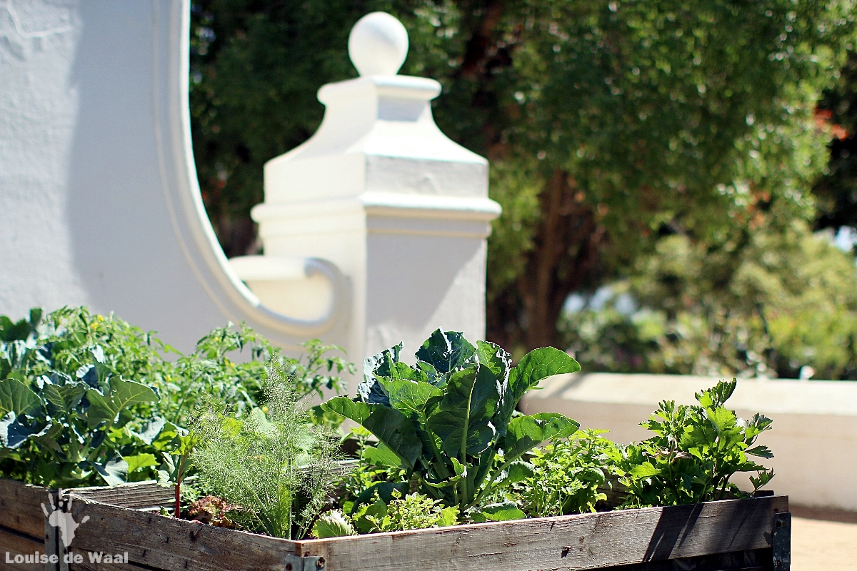 Organic vegetable garden at Vergenoegd