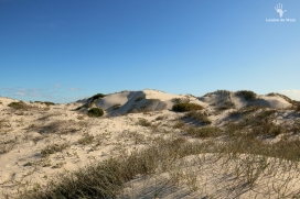 Dune systems at Rocherpan