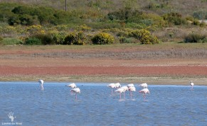 Rocherpan birding reserve sleeping flamingos