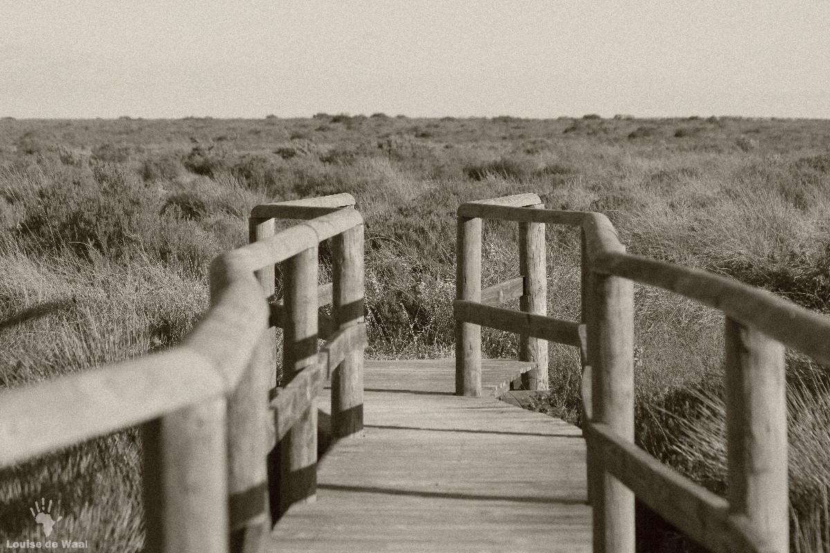 Rocherpan boardwalks to vlei