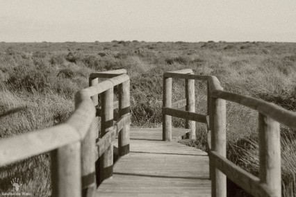 Rocherpan boardwalks to vlei