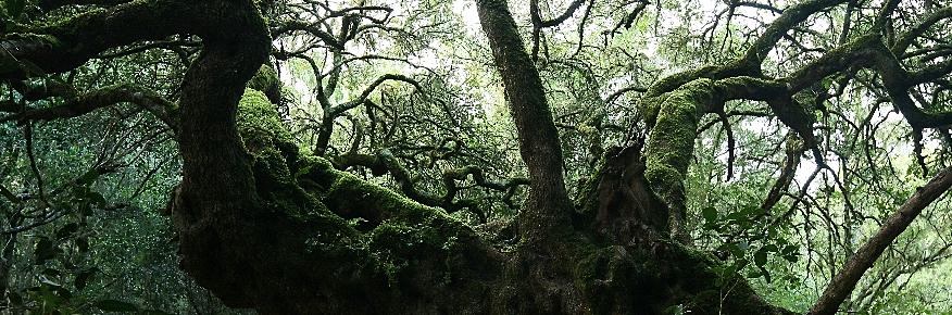 Platbos Forest Reserve, Gansbaai, Overberg