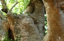Tree details in Platbos