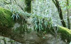 Tree trunk ecosystem in Platbos