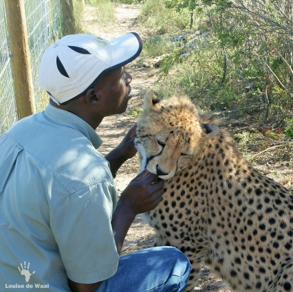 Animal petting encounters