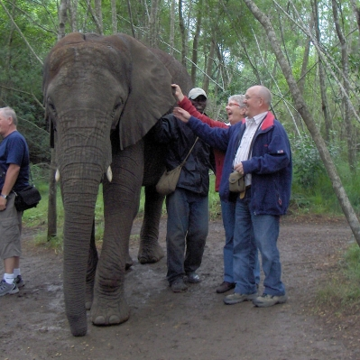 Elephant encounters Garden Route