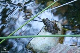 Frog at Gamkaberg Nature Reserve, Oudtshoorn