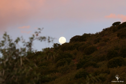 Full moon rising over Gamkaberg