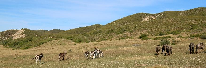 Gondwana Game Reserve Garden Route