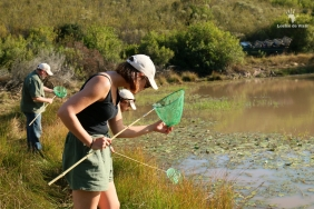 Invertebrate survey Gondwana Game Reserve, Mosselbay