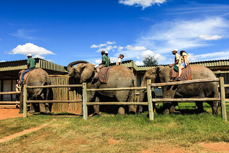 elephant-back-safaris-garden-route-volunteer-expeditions
