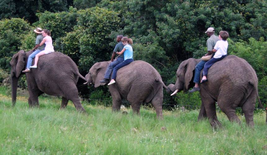 elephant-riding-elephant-sanctuary