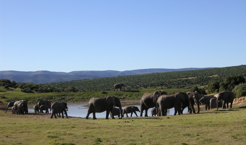 elephants-at-waterhole