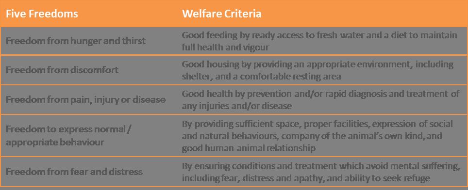 Five Freedoms animal welfare concept