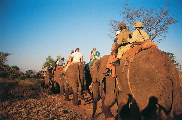 Elephant riding at Pilanesberg.