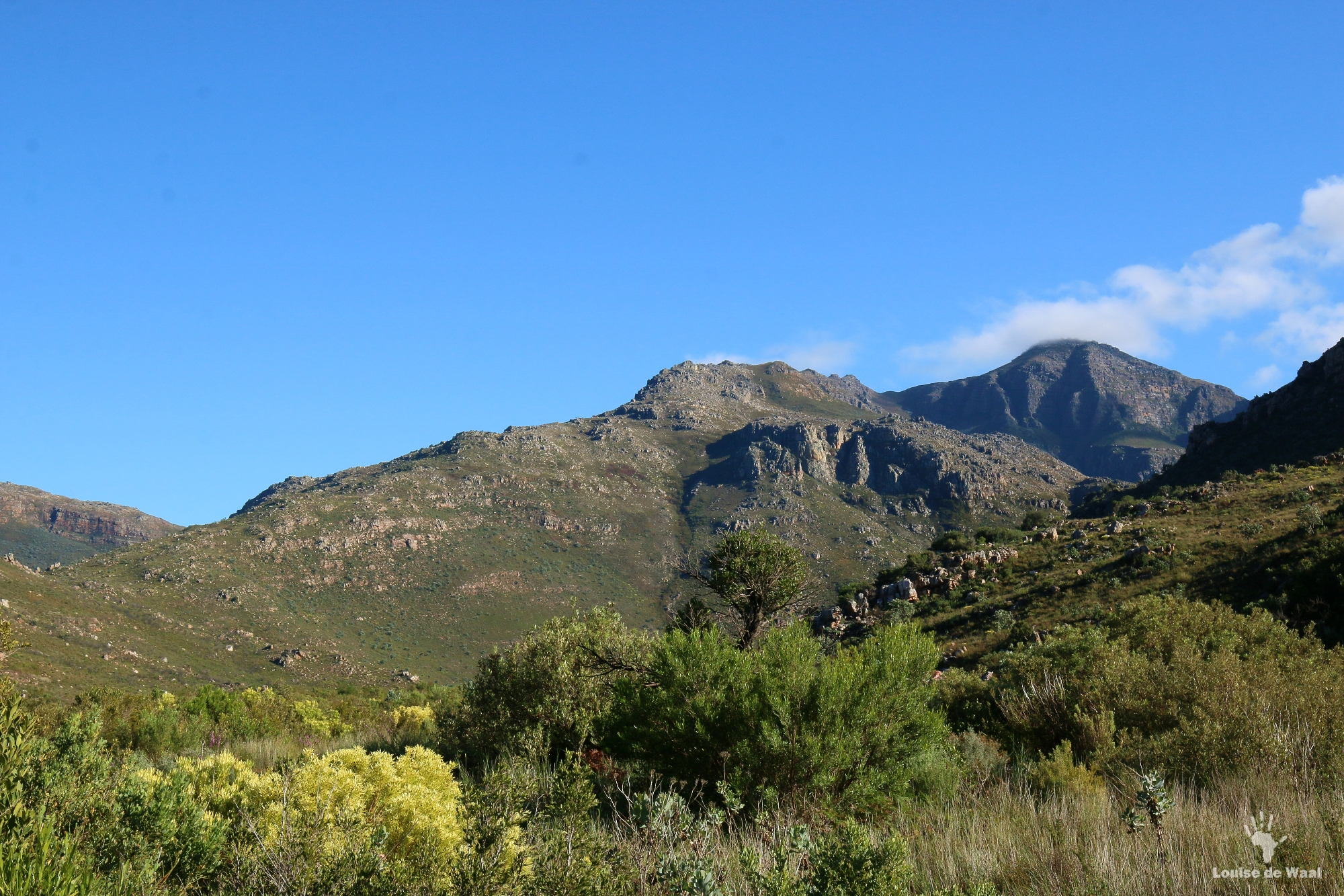 View across Bastiaanskloof Reserve, Wellington.