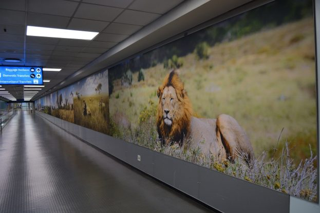 New wild lion poster at OR Tambo International Airport