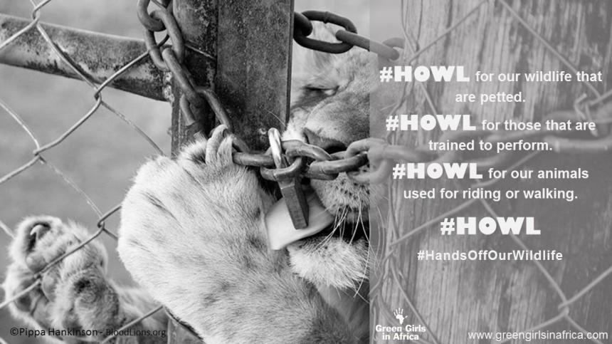 #HandsOffOurWildlife campaign