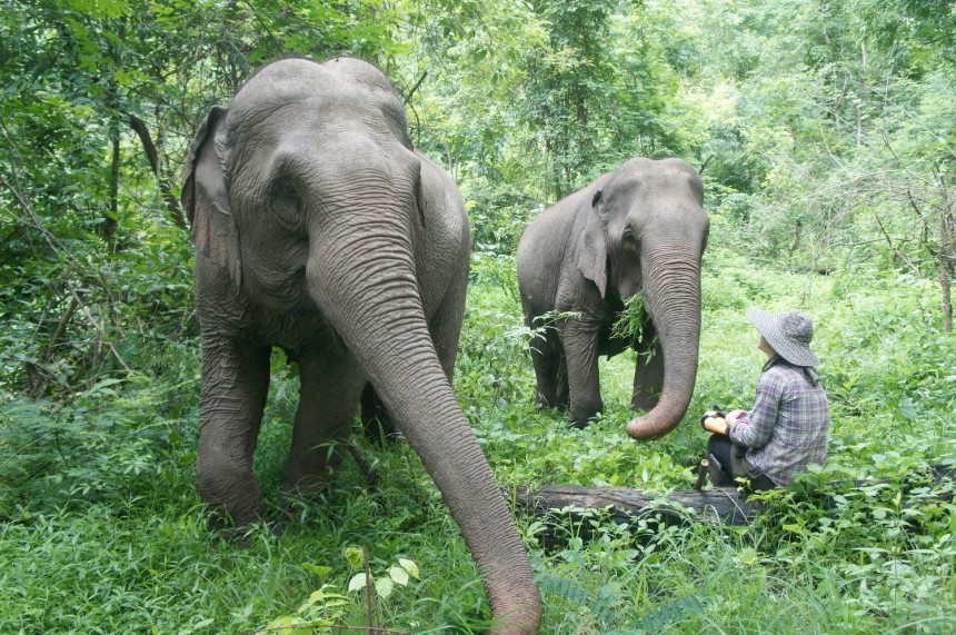 WorkingAbroad: Elephant Sanctuary project in Thailand. Photo credit: Emily McWilliam