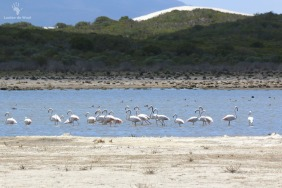 De Hoop Flamingos on Vlei