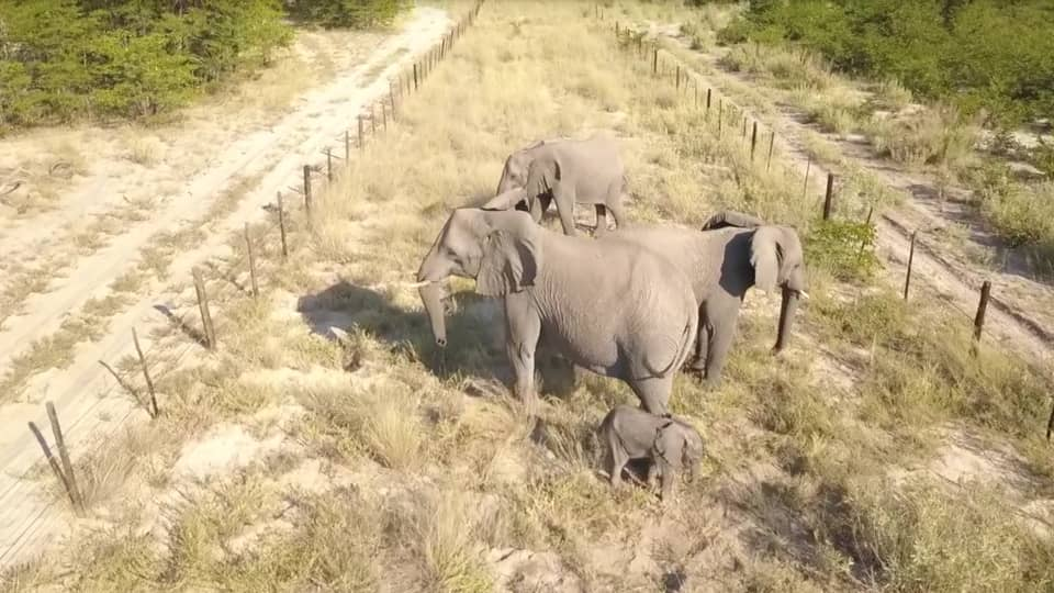 Botswana elephants caught in the middle of a scramble for